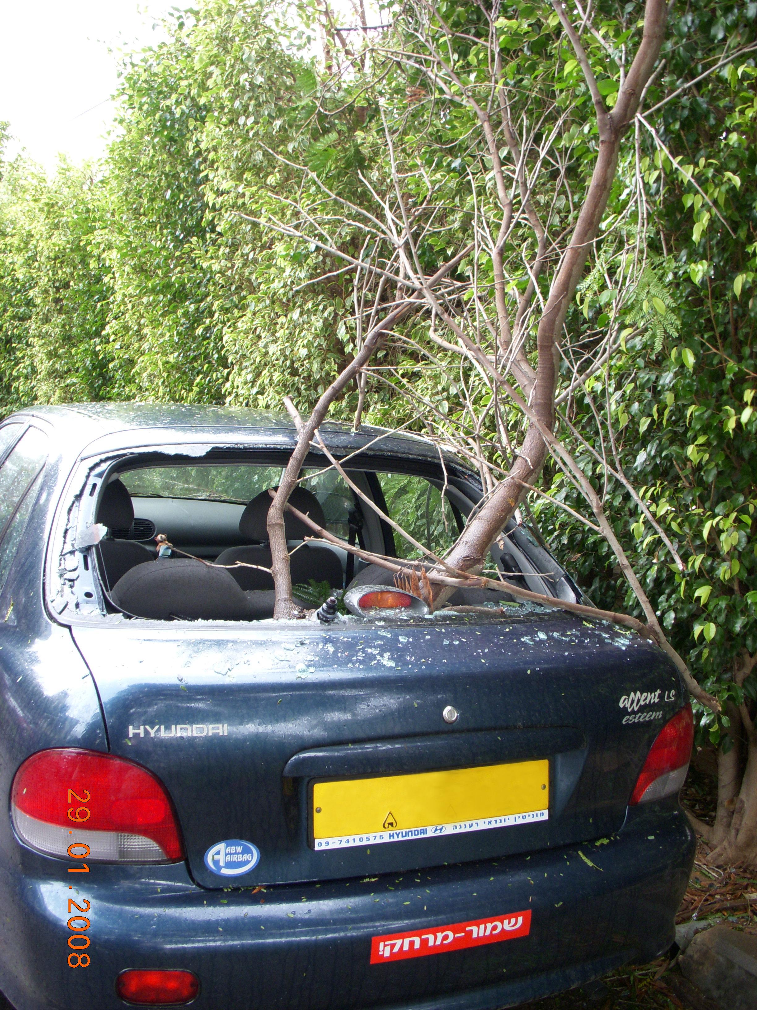 תאונת רכב קל - עץ שנשבר ופגע ברכב